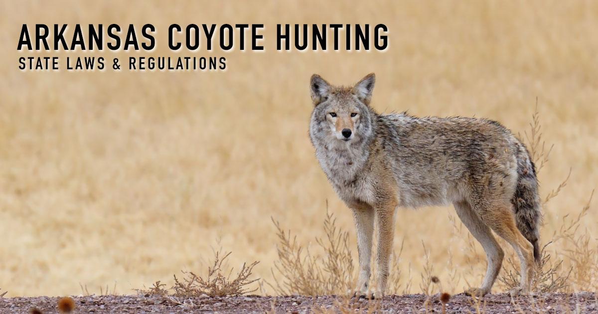 Coyote hunting arkansas laws regulations season for Arkansas fishing license