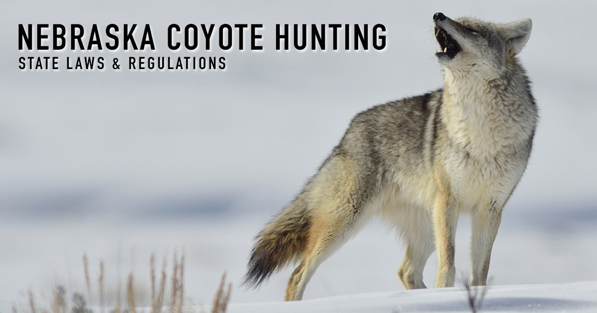 Coyote Hunting Nebraska Laws Regulations Season License Info