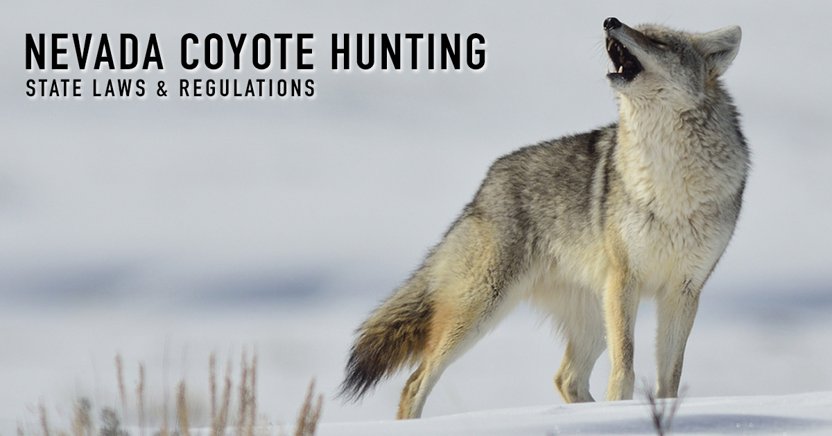 Coyote Hunting Nevada