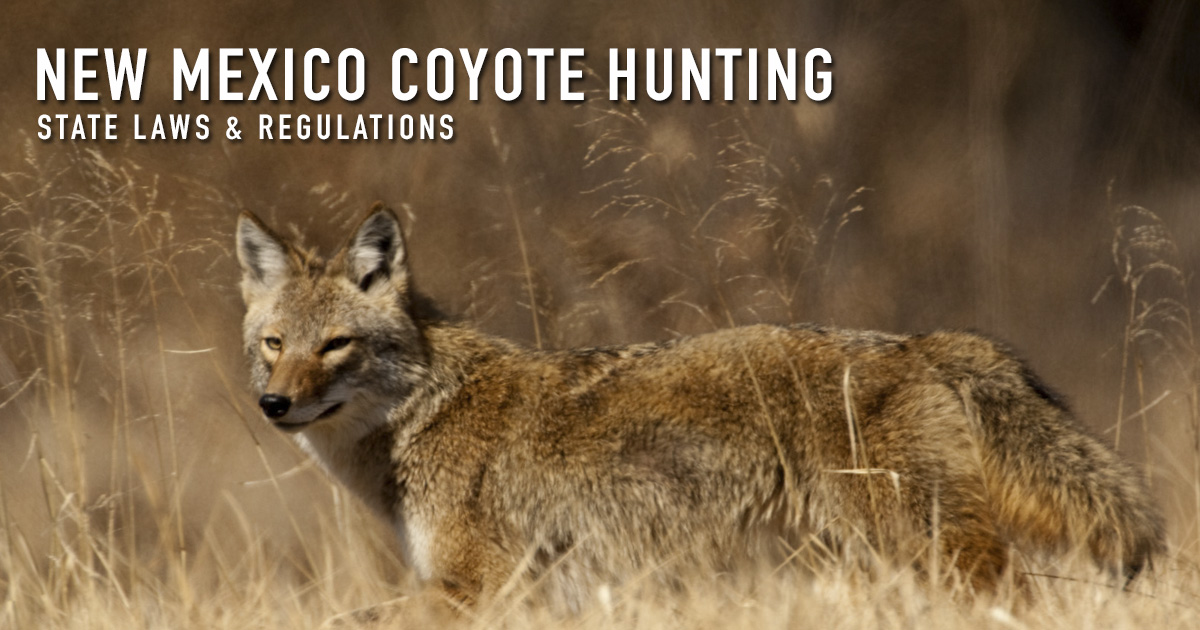 Coyote hunting in new mexico laws regulations season for New mexico fishing license