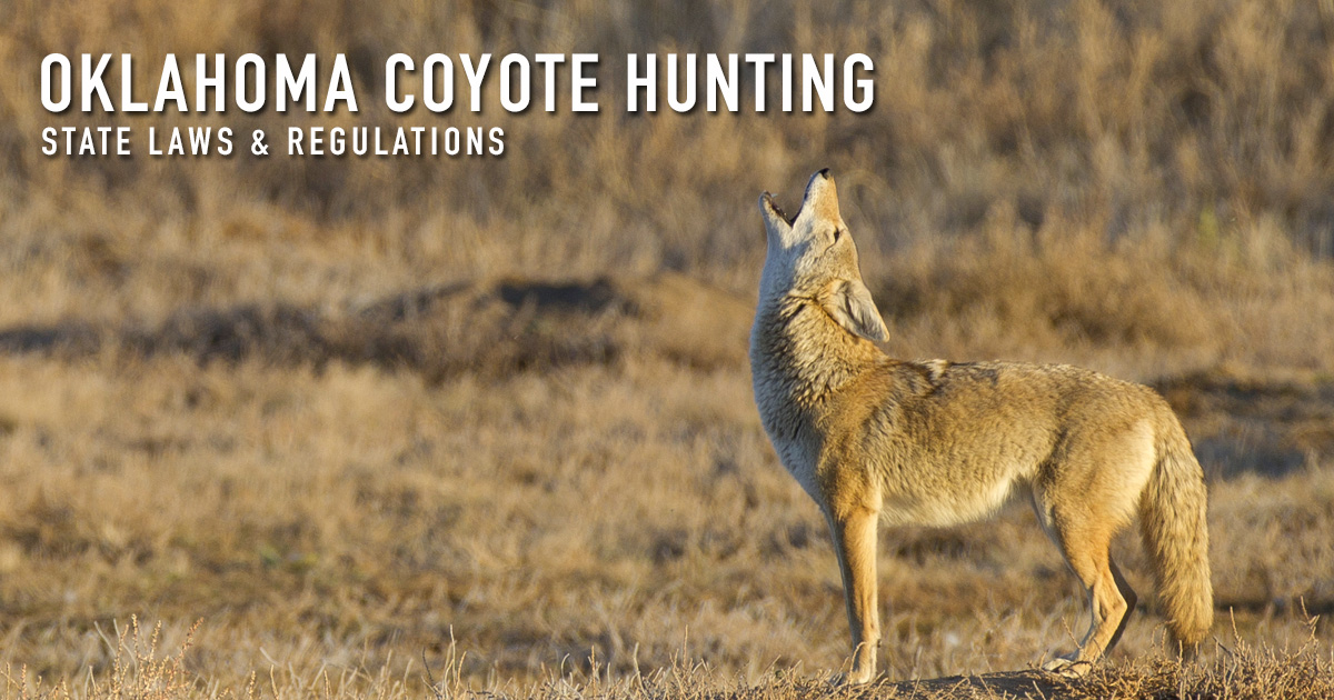 Coyote hunting oklahoma laws regulations season for Oklahoma fishing license age