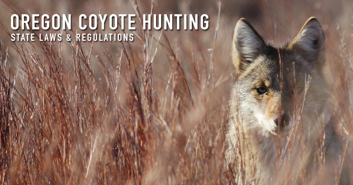 Coyote Hunting Oregon