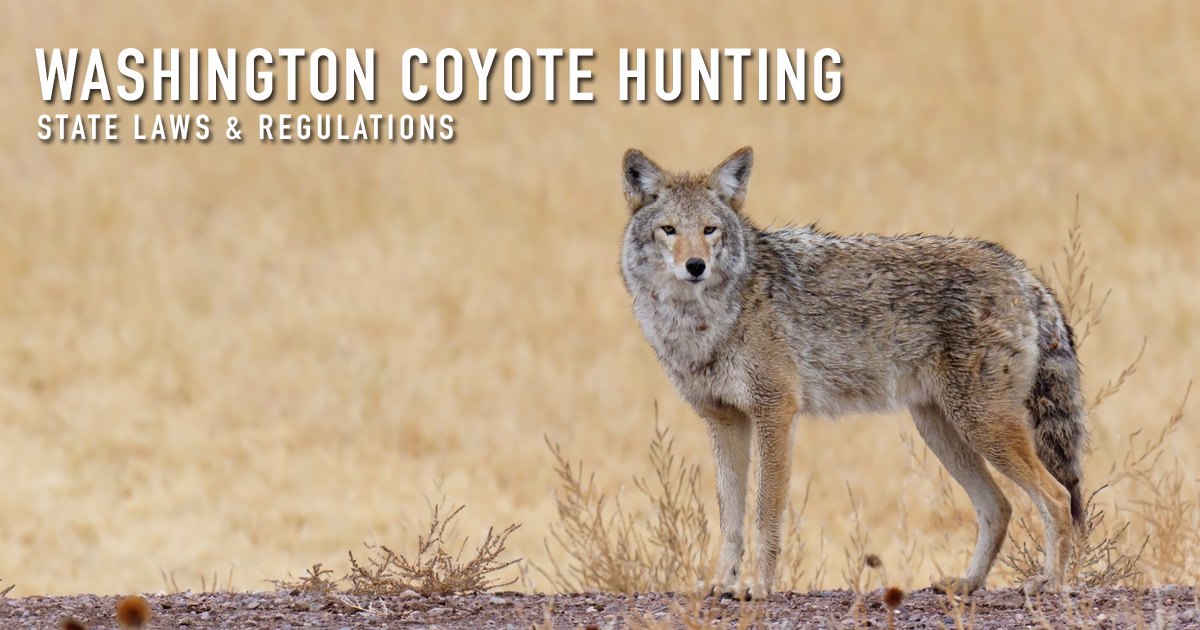 Washington Coyote Hunting