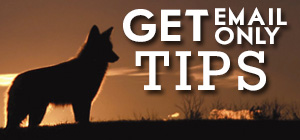Click for 101 FREE Tips